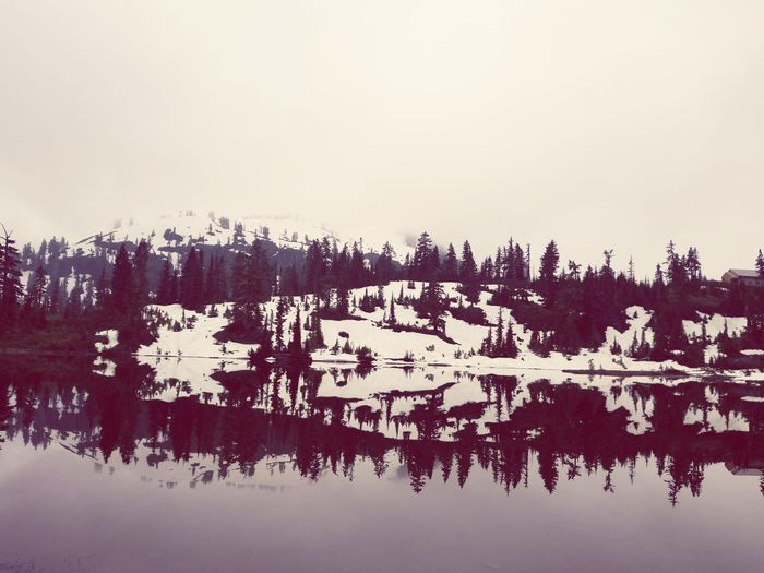 Picture Lake Picture Lake Trees Tranquil Scene Ink Blot Therapy Shuksan Lake Lake Reflections Reflection Tree Water Snowcapped