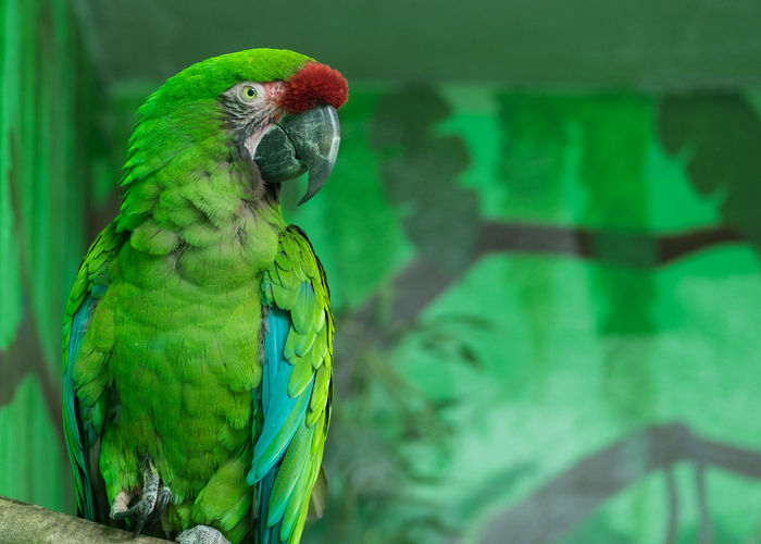 Bird Animal Themes Green Color Parrot Focus On Foreground Animal Wildlife One Animal Macaw Nature Close-up Perching Beauty In Nature
