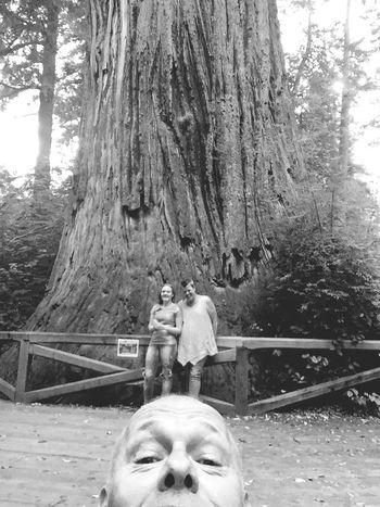Self Portrait Around The World That's Me Redwood Trees Black & White California Redwoods