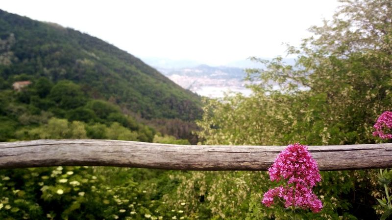 Nature Tree Purple Flower Pink Color Outdoors Beauty In Nature Day Plant Landscape Scenics No People Growth Tranquility Grass Mountain Freshness Close-up Sky Campiglia Laspezia Panoramic Photography Panoramic Panoramic Landscape Golfo Di La Spezia