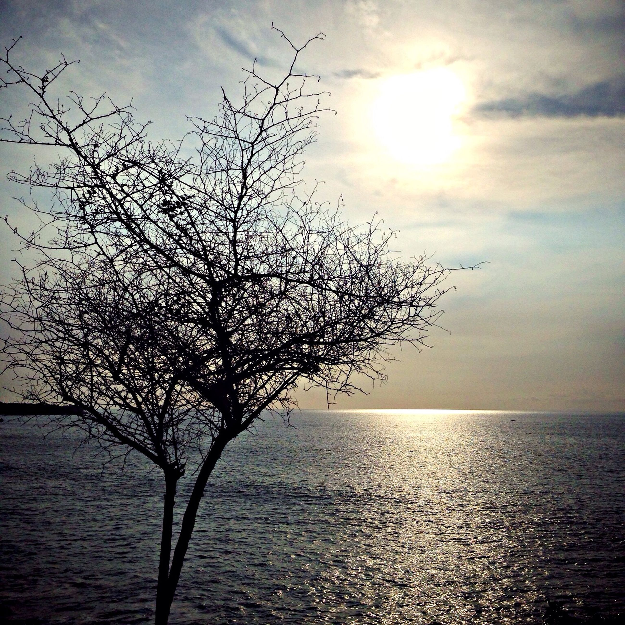 water, horizon over water, sky, sea, tranquil scene, tranquility, beauty in nature, scenics, branch, nature, tree, sunset, sun, bare tree, cloud - sky, silhouette, cloud, idyllic, outdoors, no people