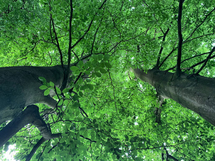 Directly below shot of tree by lake in forest