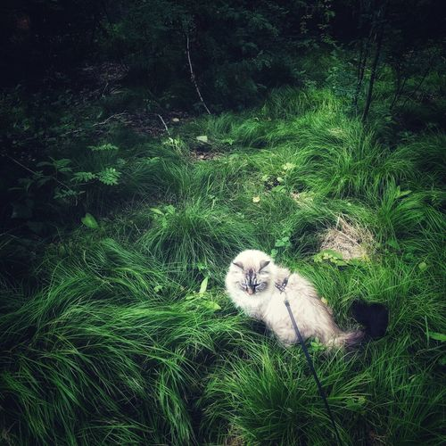Cat relaxing on grass
