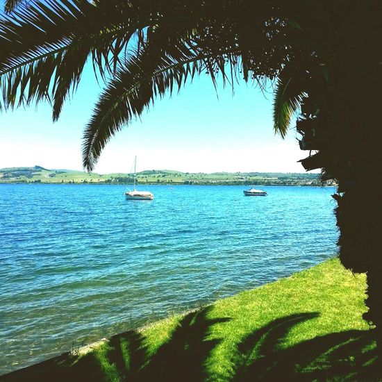 Lake Taupo Summerfeeling Beautiful Nature