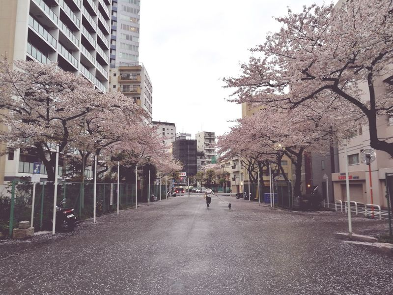 City Building Exterior Architecture Built Structure Tree Skyscraper Outdoors Cloud - Sky Day People Sky Blossoms  Blossom Sakura☆cherry Blossam Blossom Tree Sakura2017 Sakuras Sakura Trees Blossoms  Blossoms  Sakura Sakura Blossom