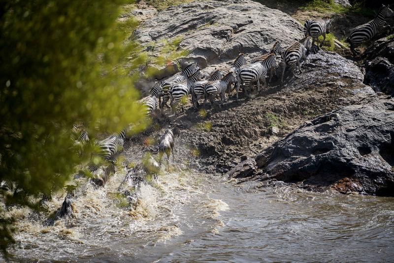 View of crocodile on rock