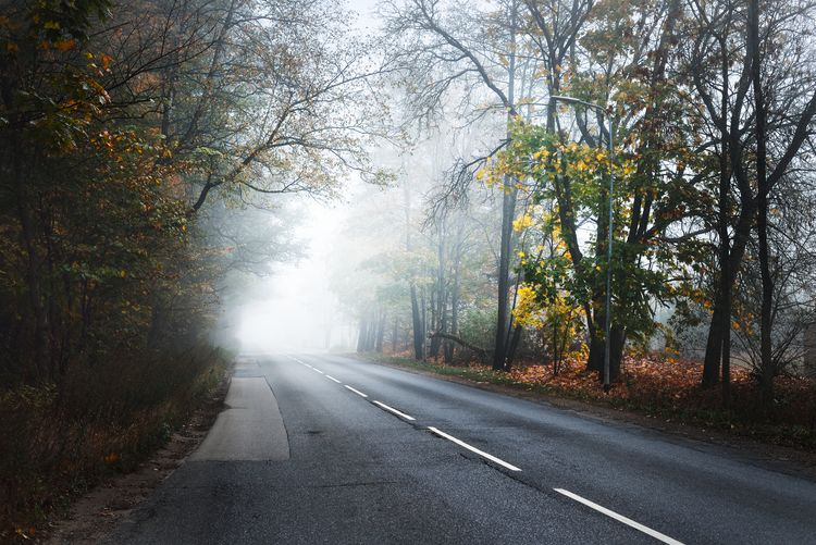 Road by trees in forest during foggy weather