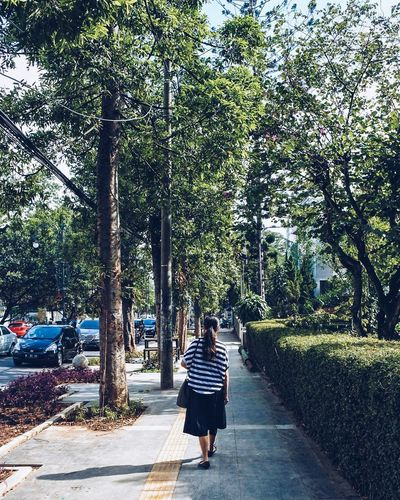 The bright path. Tree Full Length Rear View One Person Outdoors Real People Day Leisure Activity Women People One Woman Only Adults Only Nature Only Women Young Adult Adult Sky Community Outreach The Street Photographer - 2017 EyeEm Awards