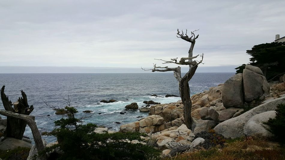 The Ghost Tree 17 Mile Drive Pebble Beach California Landscapes Carmel-by-the-sea EyeEm Best Shots - Nature California Coast EyeEm Gallery Eyeemphotography EyeEm Coastline Scenic View Coastal_collection Tree_collection  Trees Horizon Over Water Nature's Diversities S6