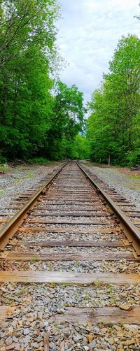 Tracks Railroad Track Transportation Rail Transportation Day No People Outdoors High Angle View Nature Water The Way Forward Sky Tree Grass train tracks The Photojournalist - 2017 EyeEm Awards The Great Outdoors - 2017 EyeEm Awards The Street Photographer - 2017 EyeEm Awards Photography Outdoors, Outside, Open-air, Air, Fresh, Fresh Air, Beauty In Nature Landscape Outdoors Photograpghy  Picoftheday Break The Mold.