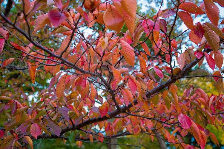 Streetphotography Street EyeEm Best Shots Autumn Mood Plant Tree Branch Beauty In Nature Autumn Growth Plant Part Change Leaf Close-up No People Day Nature Outdoors Focus On Foreground Low Angle View Tranquility Vulnerability  Orange Color Fragility Maple Leaf Leaves Fall