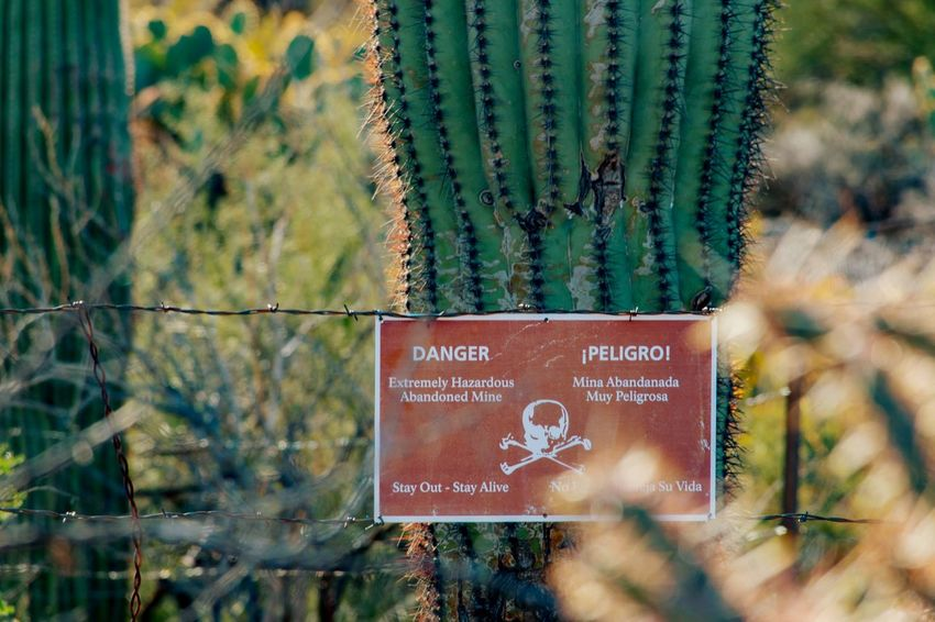 Saguaro National Monument West Peligro Danger Mine Cacti Taking Photos Photography Warning Carnegiea Gigantea