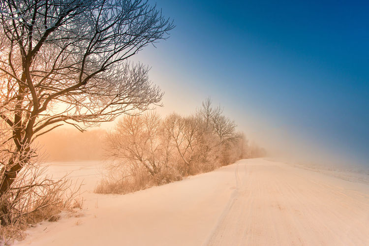 Bare trees on snow covered land against sky during sunset