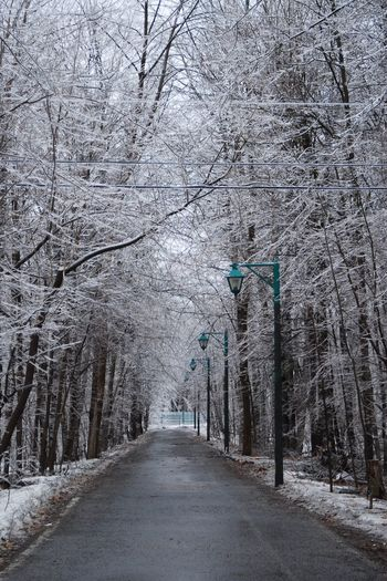Tree Plant The Way Forward Direction Snow Winter Diminishing Perspective Cold Temperature Growth Beauty In Nature Forest Road Transportation Nature Land Tranquility No People Day Tranquil Scene