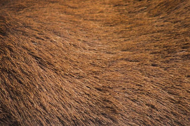 Full frame shot of a horse