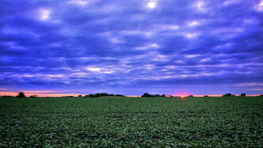 Sunset Farmland Rural Scenes Landscape Clouds And Sky Soybeans Nebraska Color Photography Setting Sun