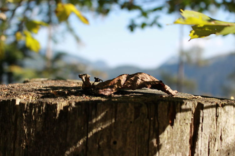 A New Perspective On Life Nature No People Focus On Foreground Sunlight Close-up Wood Tree Stump