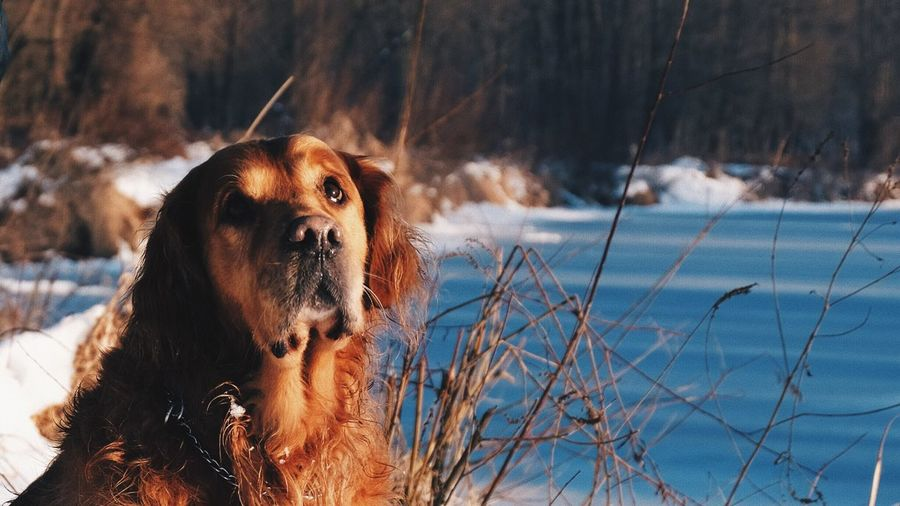 Winter Dog Pets Cold Temperature Domestic Animals Animal Themes Snow Mammal One Animal No People Nature Outdoors Focus On Foreground Day Tree Beauty In Nature Vscocam EyeEm Best Shots Fujifilm_xseries