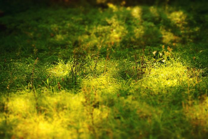 Grass Nature No People Growth Day Outdoors Green Color Tranquility Field Plant Beauty In Nature Close-up Freshness Fall Colors Enjoy Sunshine  Enjoy Sunshine  Enjoy Sunshine  Enjoy Life EyeEm Nature Lover Nature Reserve EyeEm Gallery EyeEm Best Edits Ócsa National Park Grass Enjoy Sunshine  Be. Ready.
