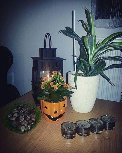 Chestnut Kalanchoe Halloweeniscoming Halloween Halloween2015 Myhome Livingroom Evening Planter Lampion IKEA Ikeamagyarorszag