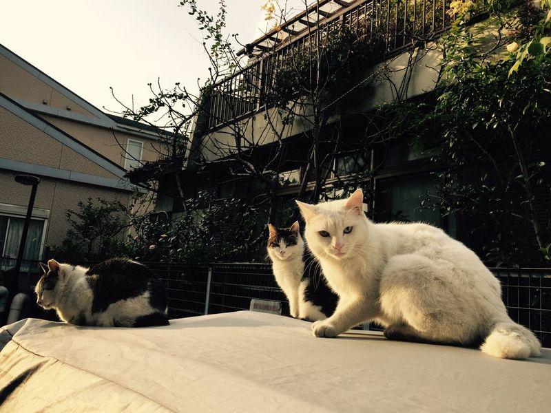 Tokyo Streetphotography Cat