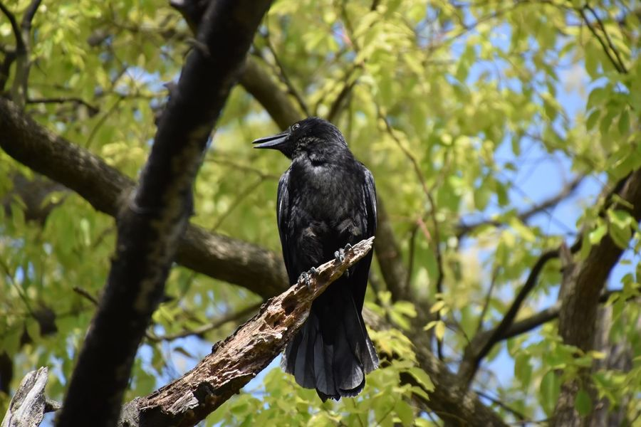 Tree Trees Warking Around Crow Birds Bird Bird Photography Birds_collection Birdwatching お散歩Photo Naturelovers Nature Nature_collection Nature Photography Black Animal Blackbirds Lookingup 夜宮公園 カラスしか見つけられなかった(´-ω-`)