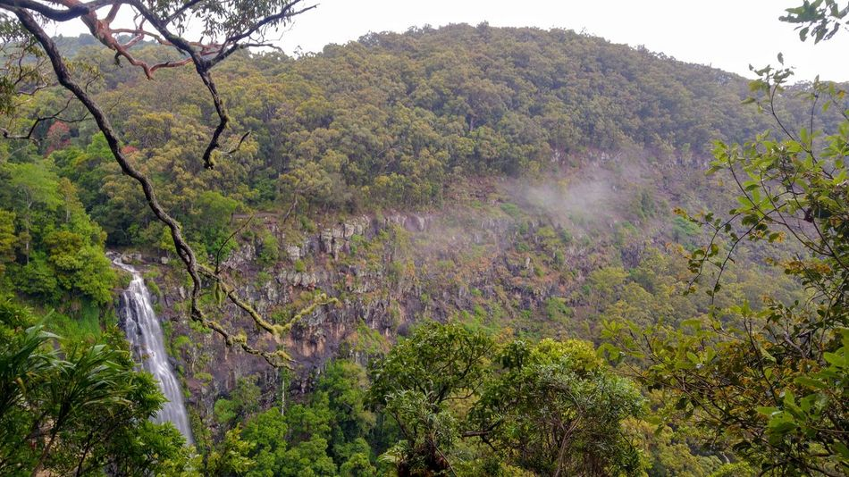 Australia Australian Landscape Cloud Cloudscape Exotic Rainforests Beauty In Nature Cloud - Sky Day Forest Green Color Landscape Lush Foliage Nature No People Outdoors Plant Rainforest Rainforest Australia Rainforest Qld Scenics Tranquility Tree Water Waterfall An Eye For Travel