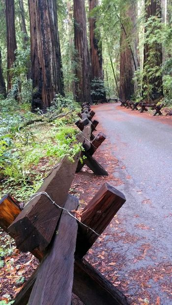 Wet wooden cross angle fence with wire closures. Redwood forest trail. Wet Fence Barrier X Wire Crossed Forest Trail Hiking Walking Path Solitude Zen Countryside Moody Misty Rain Drenched Rain Curved  Tree Tree Trunk Sunlight Woods Pathway Greenery Growing Walkway Paved Plant Life Treelined