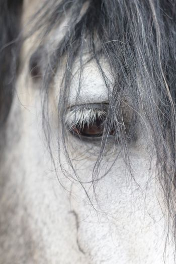 Horseeye Horse Animal Themes One Animal Domestic Animals Mammal Close-up Livestock Outdoors Eyelash Sensory Perception Eyeball