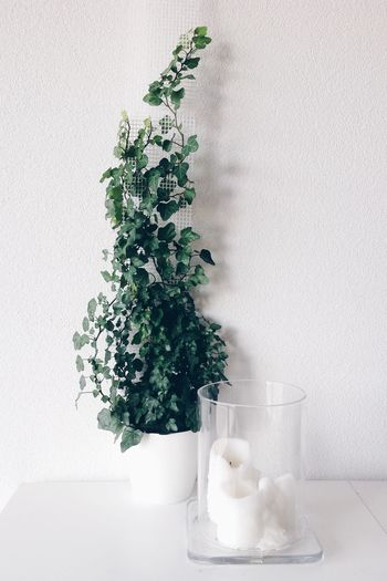 Plant Growth Indoors  No People White Background Close-up Beauty In Nature Simplicity Styled Stock Lifestyle Photography Minimalism Minimalist White Living Nature Interior Decorating White Interior Urban Jungle Greenery Creeper Plant Ivy Green Color Leaf Candle Interiorstyling