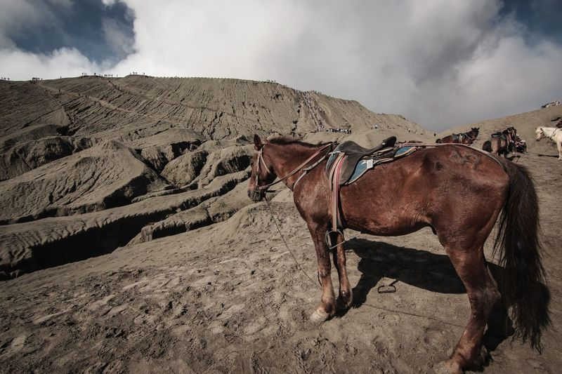View of a horse on land
