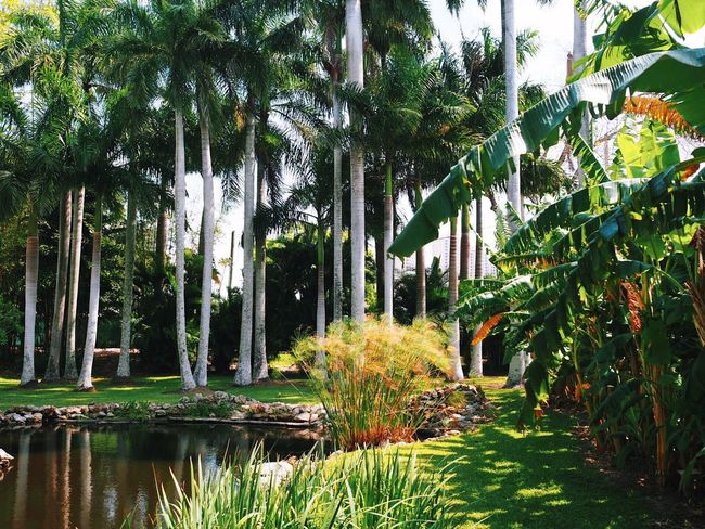 Summer vibes. Nature Beauty In Nature Palm Tree Tree Trees Green Color Backyard Growth Plants Palm Trees Florida Lawn Landscape Summer Summertime Nature Photography Outdoor Photography Sommergefühle