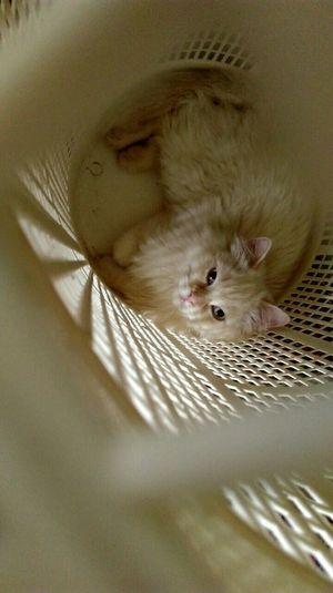 Likeforlike Cat Cute Cats Cat♡ Cats Followme Follow4follow Cute Pets HTC_photography HTC One M9