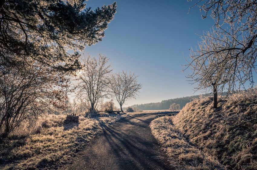 Around the corner... Tree The Way Forward Nature Road Clear Sky Bare Tree Beauty In Nature Sunlight No People Cold Temperature Tranquility Shadow Day Scenics Outdoors Branch Landscape Snow Sky Winter Eos1300d Canon_photos Canon Canonphotography Canon EOS 1300D