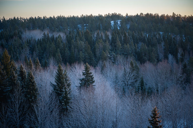 High Angle View Of Trees Growing At Forest During Winter