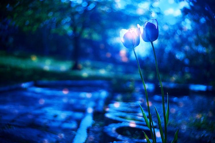 Stardust Garden Tulips Beauty In Nature Film Film Photography Flower Reversal Film Reversalfilm Star EyeEmNewHere The Street Photographer - 2017 EyeEm Awards The Great Outdoors - 2017 EyeEm Awards
