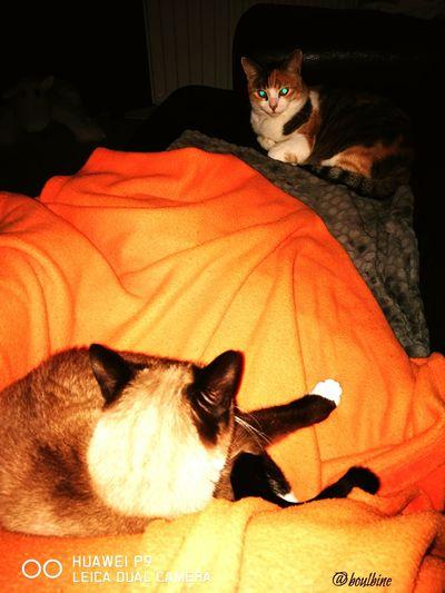 Kitty And Praline