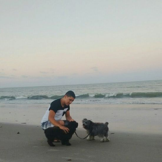 Anoitecer Beach Cãozinho Bob Kiara ❤❤ ✌