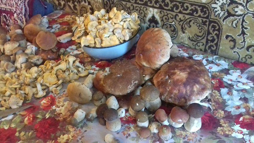 #mushrooms Mushrooms 🍄🍄 Mushrooms Mushroom Porcini Porcini Mushrooms Nature Boletus боровик Fungus Белый гриб лето Chanterelle Mushrooms грибы грибнойсезон лисички Chanterelle Close-up