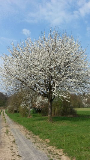 PLEASE check my other uploads. You might also like them. THANKS 4 passing by. No People Menschenleer Nature Natur Beauty In Nature Springtime Frühling No Edit/no Filter Ohne Bearbeitung Blüte Blume Walk Spaziergang Tree Baum Pflanze  Plant Fragility Freshness