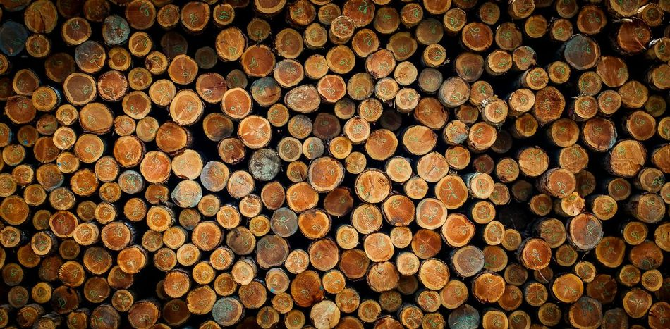 Timber Logging Northbend Photooftheday DSLR Photography Canonphotography Oregon Coast Jewell Photography Coos Bay