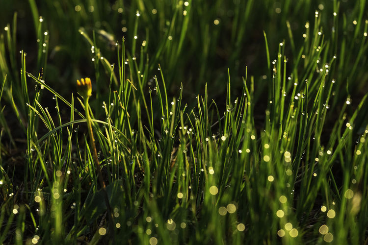 Full frame shot of wet grass on field