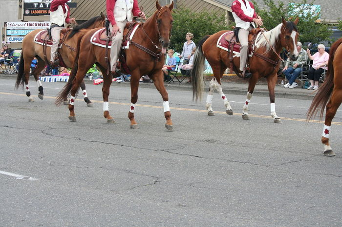 4th Of July 2016 4th Of July Parade Casual Clothing Celebration Day Group Of People Horses Leisure Activity Lifestyles Mammal Medium Group Of People Mixed Age Range Outdoors Parade