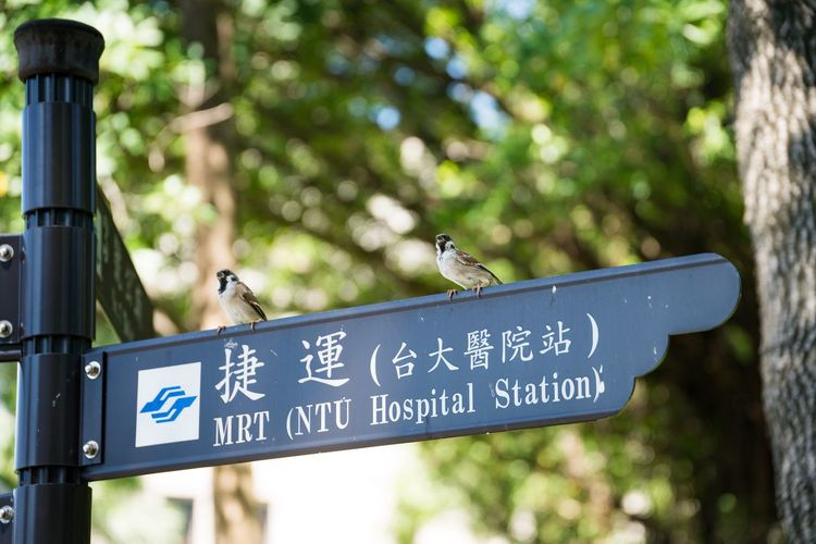 Text Focus On Foreground No People Outdoors Day Horizontal Nature Animal Themes Direction Sign Bird Taiwan Taipei,Taiwan 228 Peace Memorial Park Travel Memories