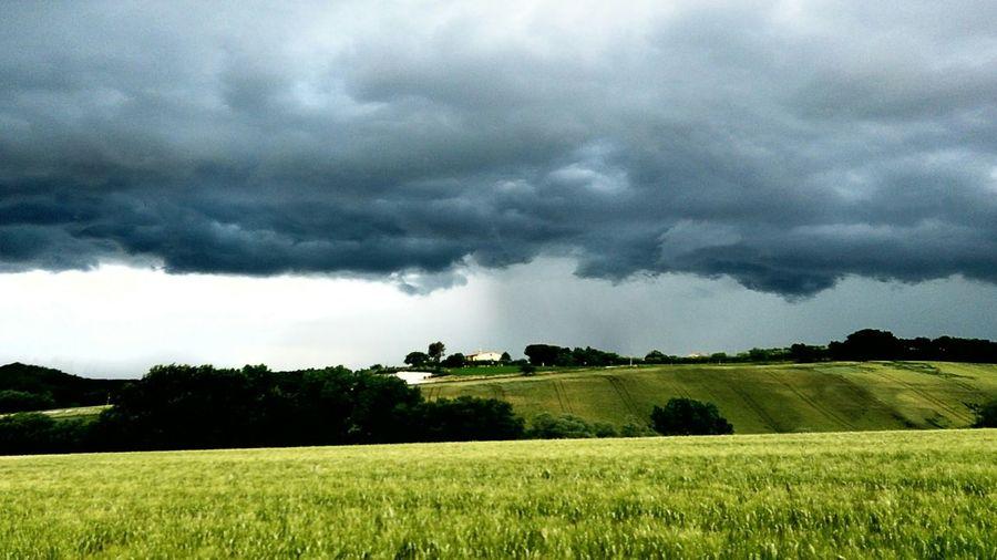 Landscape Rain