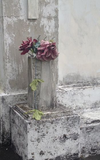 Lafayette Cemetery, New Orleans IPS2016Composition Showcase: January IPS2016Stilllife