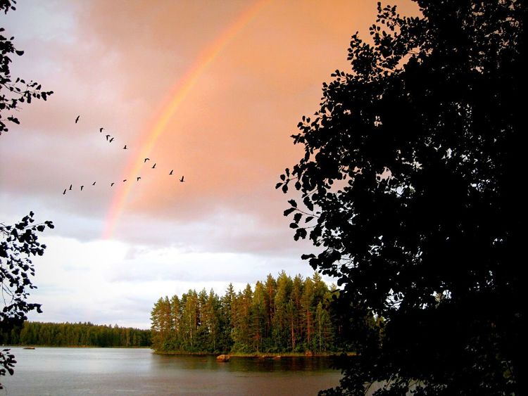 Vogelflug. Bird Flight Birds_collection Bird Flying High Tree Rainbow Rainbow Sky Finland Finlandia Beauty In Nature No People Sunset Lake Sky And Clouds Tranquility Outdoors Wilderness Alone Time Quiet Places Landscape_Collection Scenics Sun Day Light And Shadow Landscape The Great Outdoors - 2017 EyeEm Awards