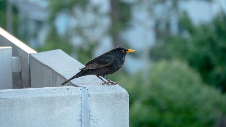 Bird perching on a wall