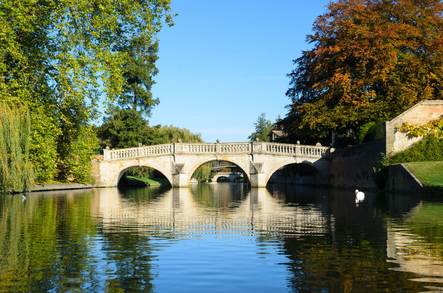 Stone bridge over Cam river in Cambridge Beauty In Nature Bridge Calm Cam Cambridge England Historic Leisure Activity Medieval Nature Outdoors Park Recreational Pursuit Reflection River Scenics Stone Sunny Swan Travel Tree United Kingdom Water