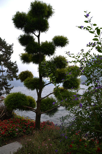 Bad Weather Beauty In Nature Botany Flower Green Color Growth Gry Sk Nature Octobre Lag Maggio Outdoors Park Plant Sky Springtime Tall - High Tranquility Tree Tree At The Lake Maggio Tree Trunk